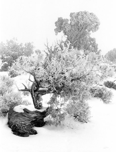 Garden of Eden, Arches National Park, Utah. The level of detail held in the frozen boughs combined with beautiful wood grain of Utah Junipers provided endless interesting compositions.